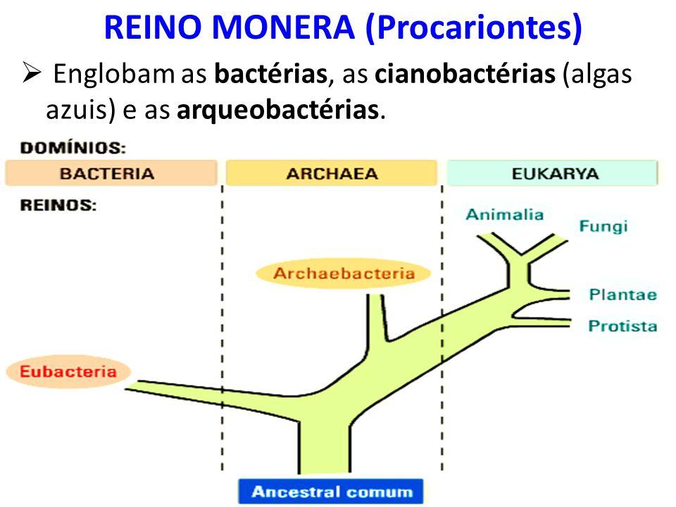 REINO MONERA (Procariontes)