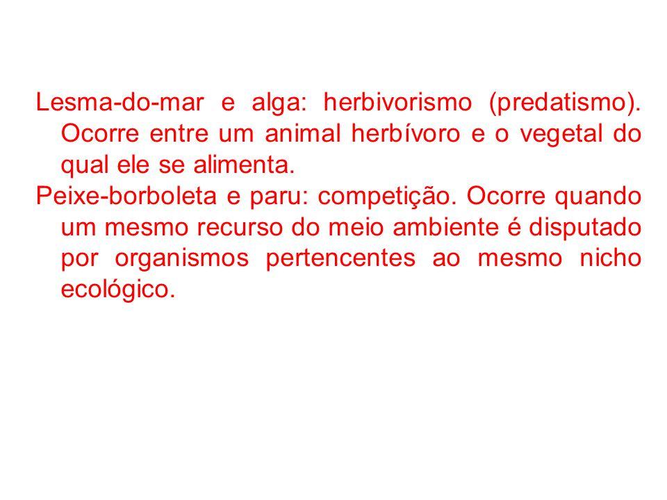Lesma-do-mar e alga: herbivorismo (predatismo)