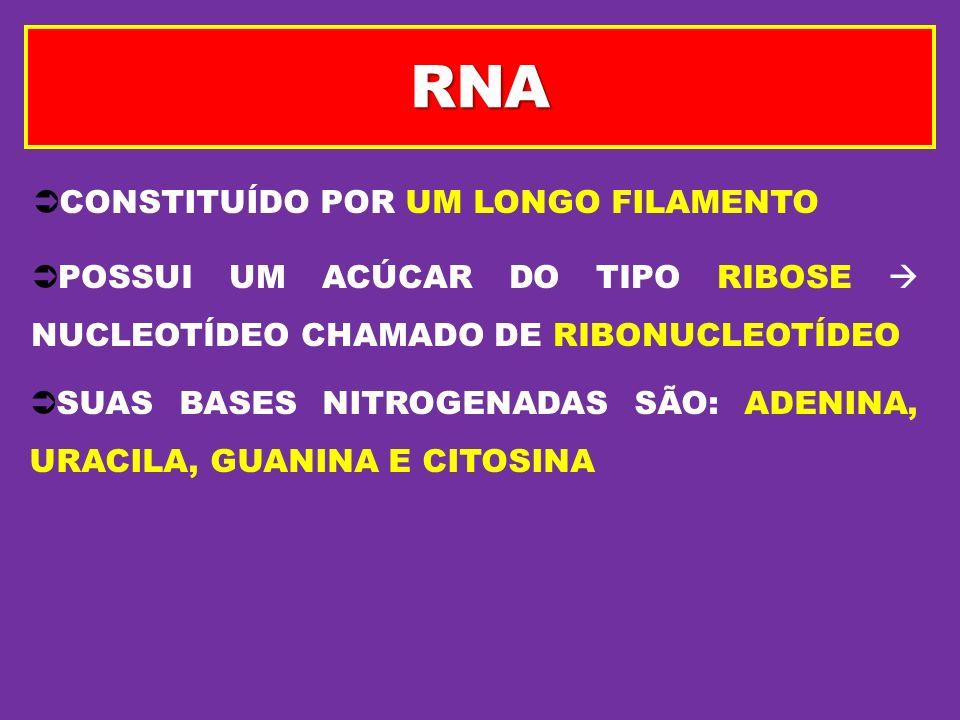 RNA CONSTITUÍDO POR UM LONGO FILAMENTO