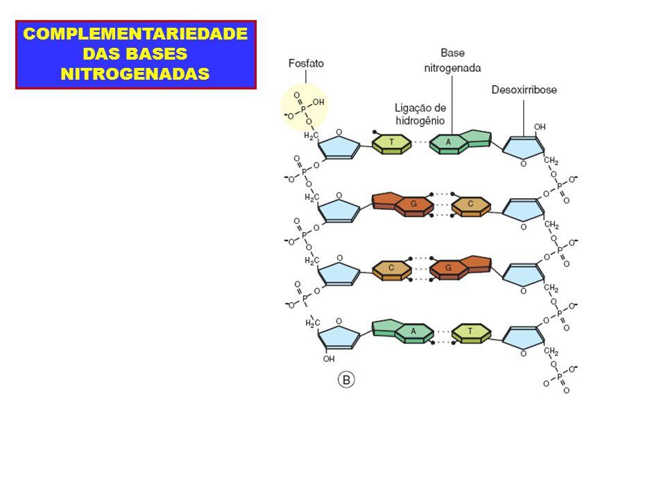 COMPLEMENTARIEDADE DAS BASES NITROGENADAS