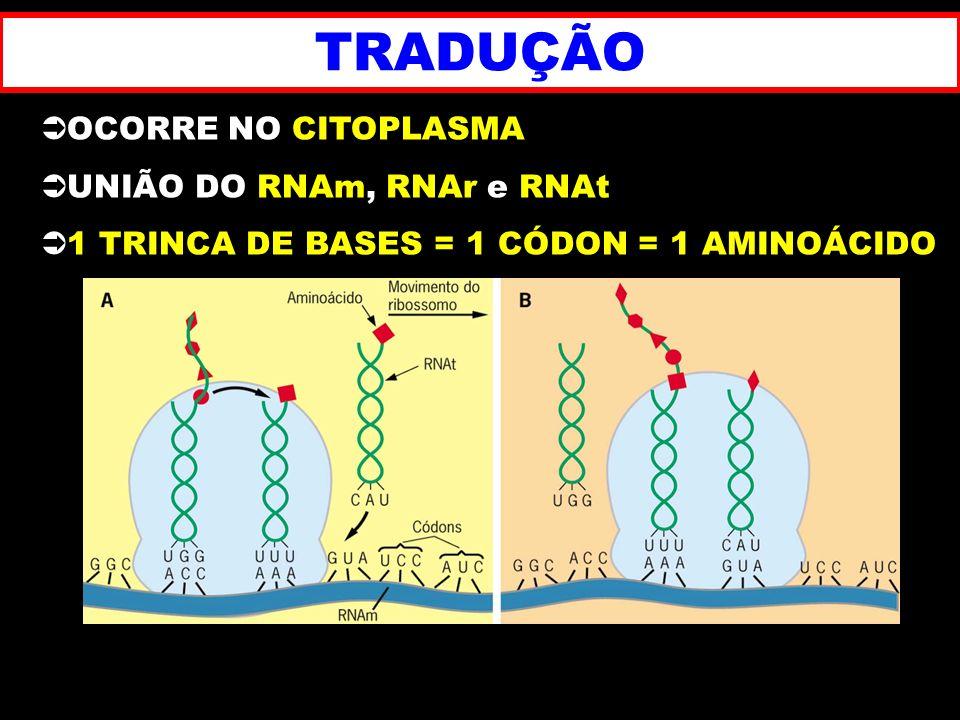 TRADUÇÃO OCORRE NO CITOPLASMA UNIÃO DO RNAm, RNAr e RNAt