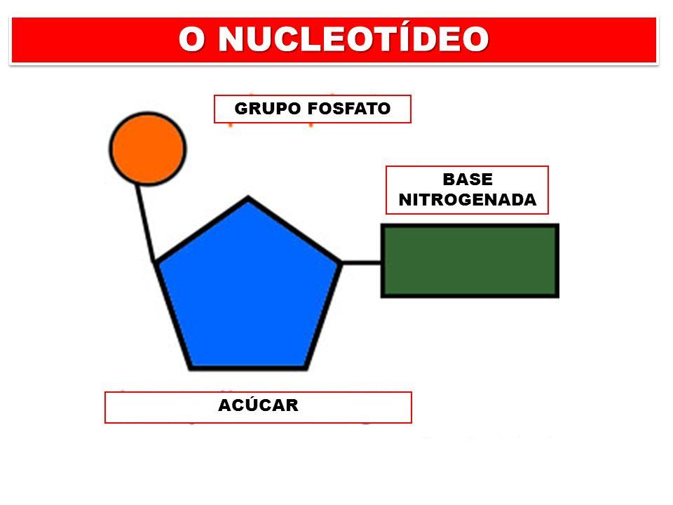 O NUCLEOTÍDEO GRUPO FOSFATO BASE NITROGENADA ACÚCAR BASE NITROGENADA