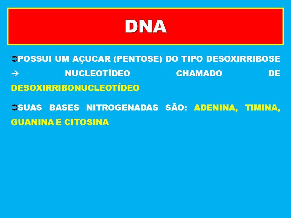 DNA POSSUI UM AÇUCAR (PENTOSE) DO TIPO DESOXIRRIBOSE  NUCLEOTÍDEO CHAMADO DE DESOXIRRIBONUCLEOTÍDEO.