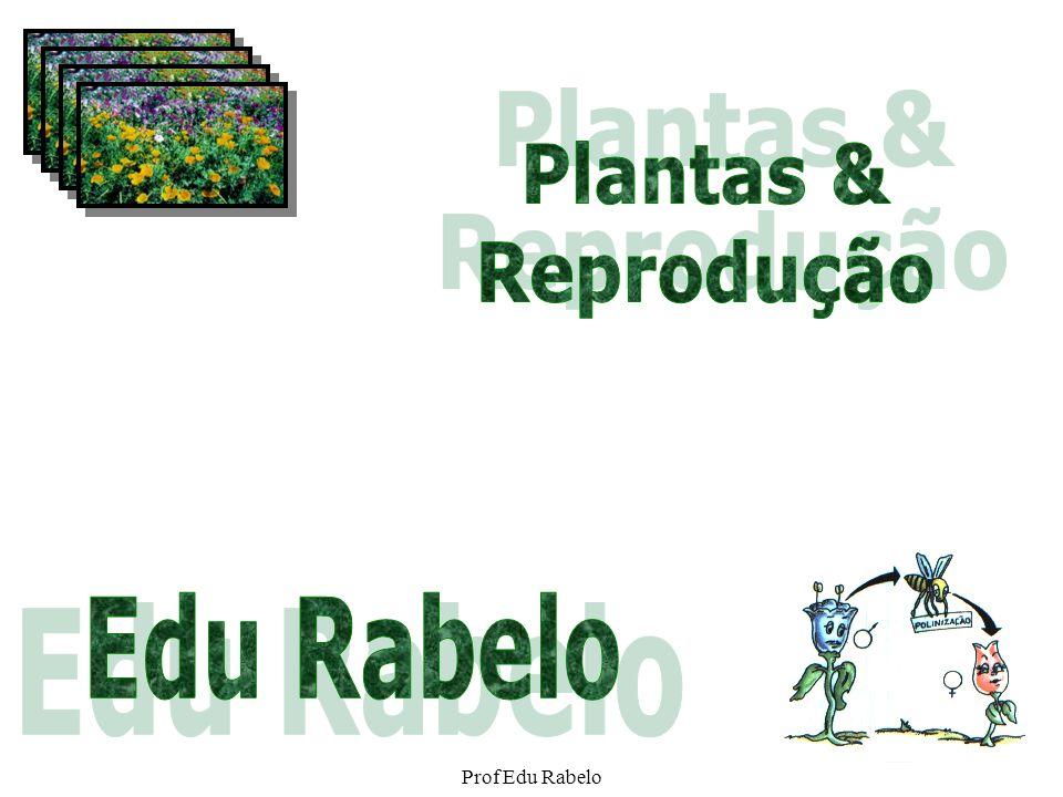 Plantas & Reprodução Edu Rabelo Prof Edu Rabelo