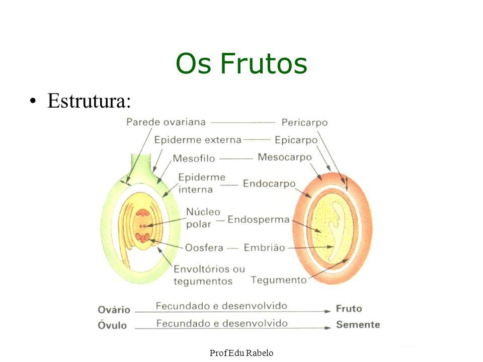 Os Frutos Estrutura: Prof Edu Rabelo