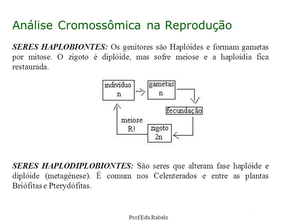 Análise Cromossômica na Reprodução