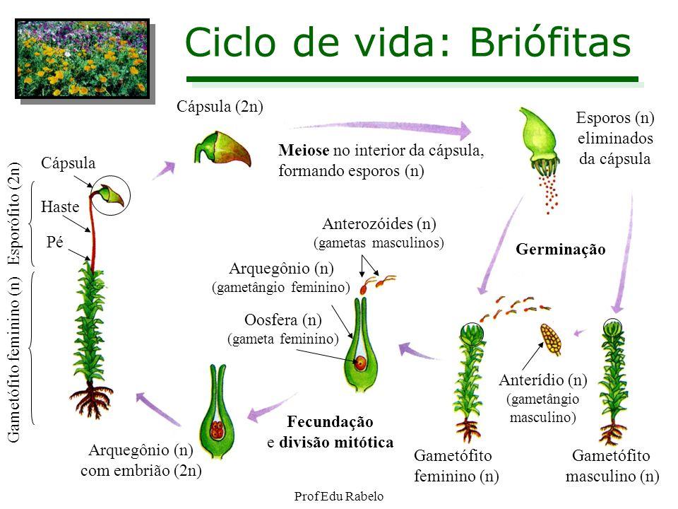 Ciclo de vida: Briófitas