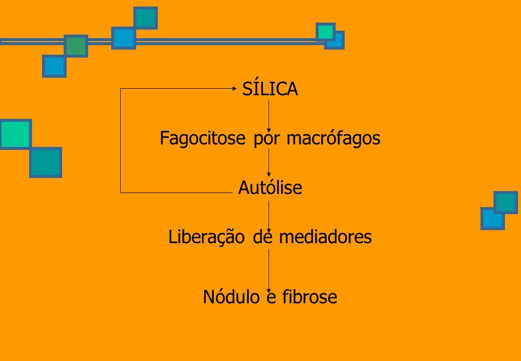 Fagocitose por macrófagos Autólise Liberação de mediadores