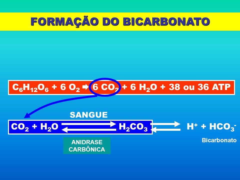 FORMAÇÃO DO BICARBONATO