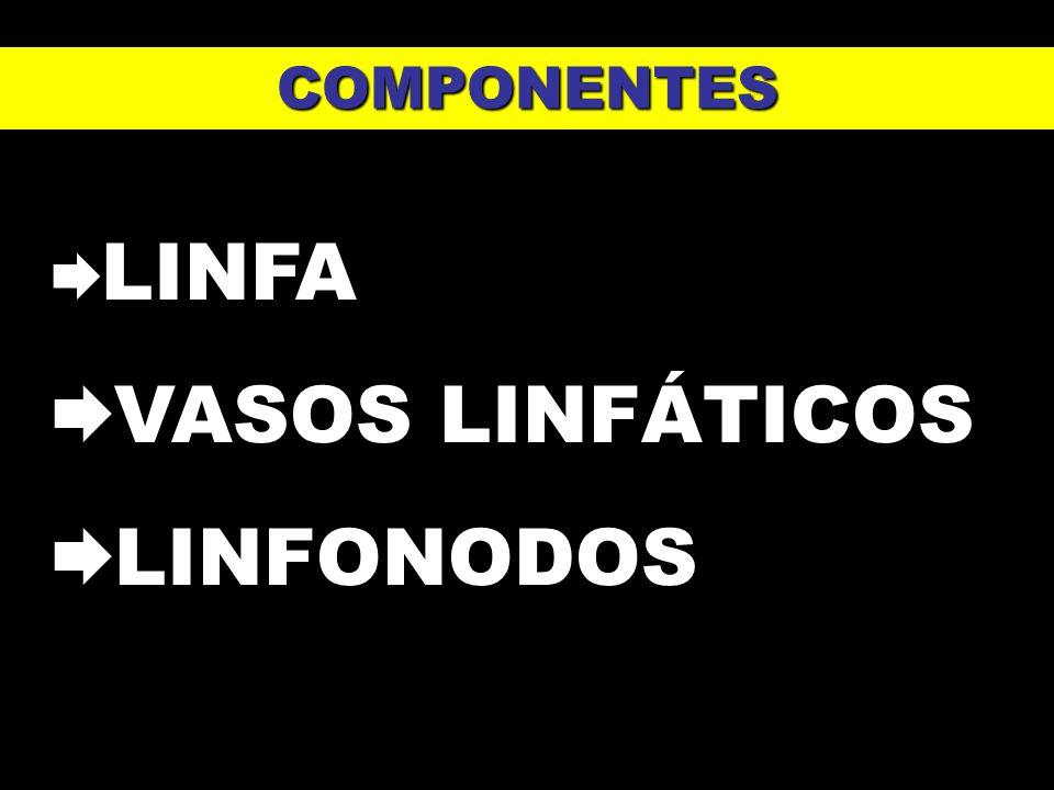 COMPONENTES LINFA VASOS LINFÁTICOS LINFONODOS