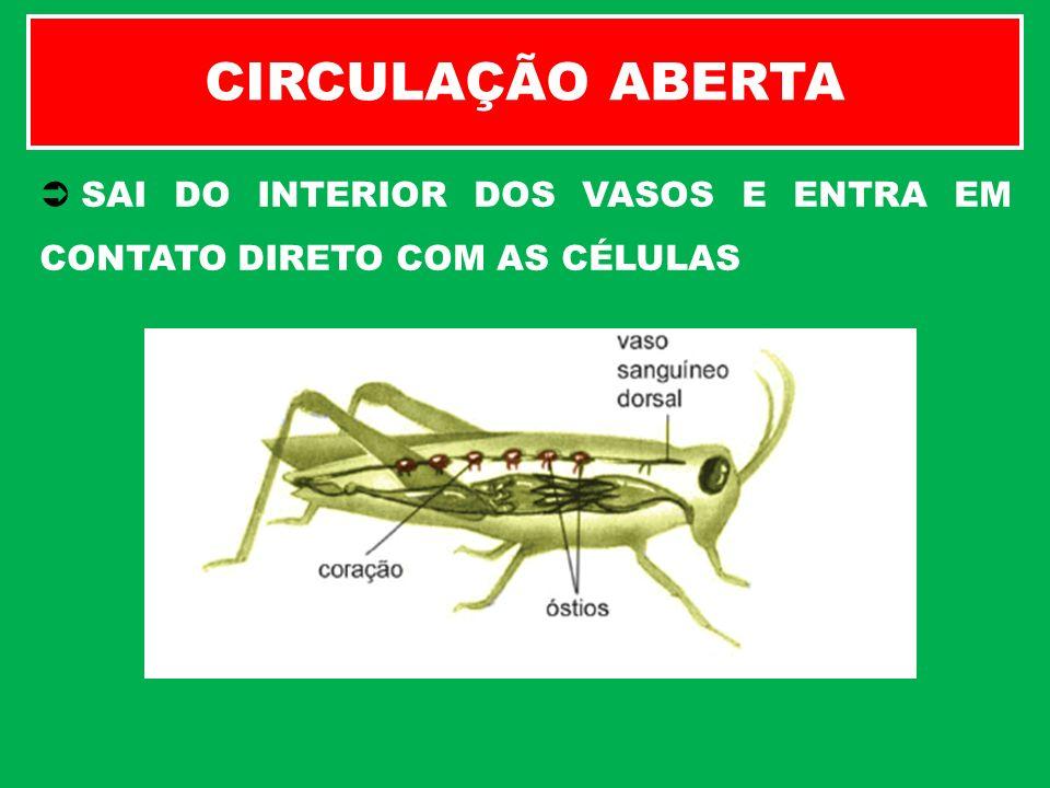 CIRCULAÇÃO ABERTA SAI DO INTERIOR DOS VASOS E ENTRA EM CONTATO DIRETO COM AS CÉLULAS