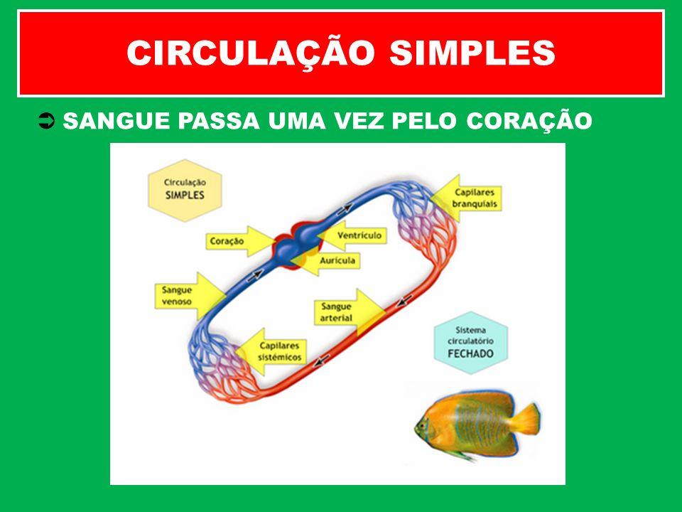 CIRCULAÇÃO SIMPLES SANGUE PASSA UMA VEZ PELO CORAÇÃO