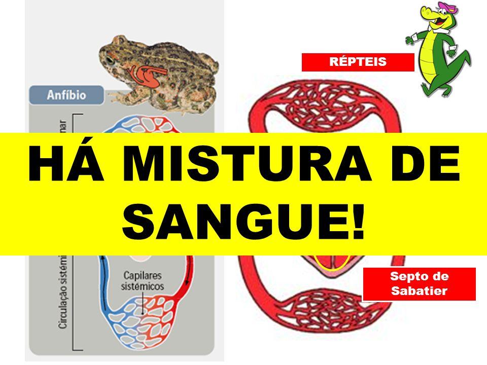 RÉPTEIS HÁ MISTURA DE SANGUE! Septo de Sabatier