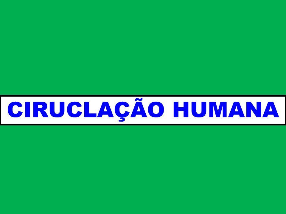 CIRUCLAÇÃO HUMANA