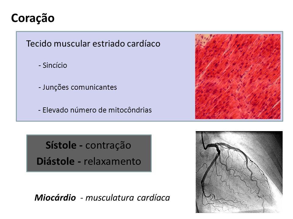 Coração Sístole - contração Diástole - relaxamento