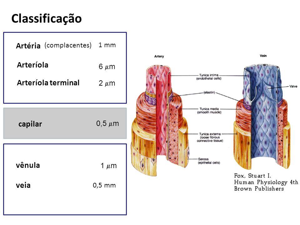 Classificação Artéria Arteríola Arteríola terminal capilar vênula veia