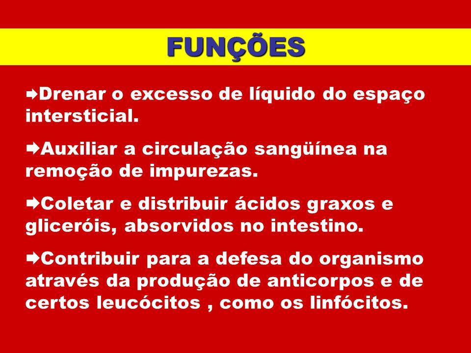 FUNÇÕES Auxiliar a circulação sangüínea na remoção de impurezas.