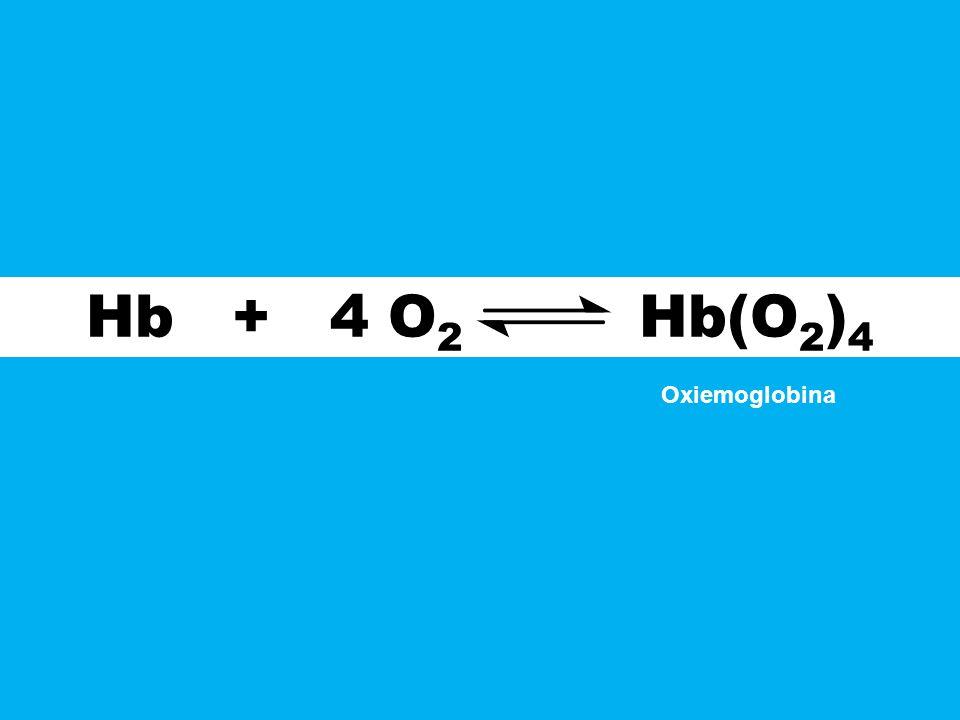 Hb + 4 O2 Hb(O2)4 Oxiemoglobina