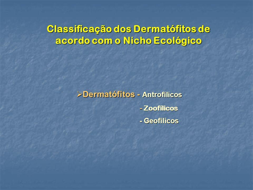 Classificação dos Dermatófitos de acordo com o Nicho Ecológico