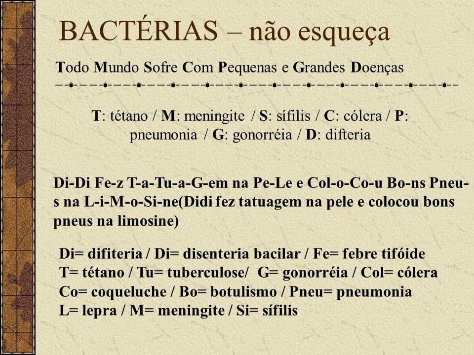 BACTÉRIAS – não esqueça