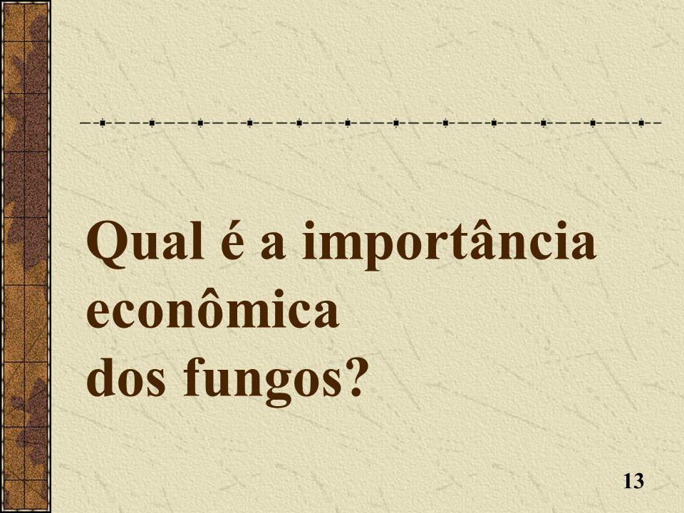 Qual é a importância econômica dos fungos