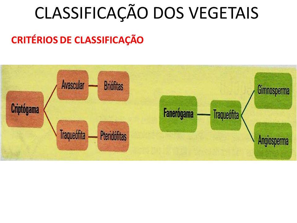 CLASSIFICAÇÃO DOS VEGETAIS