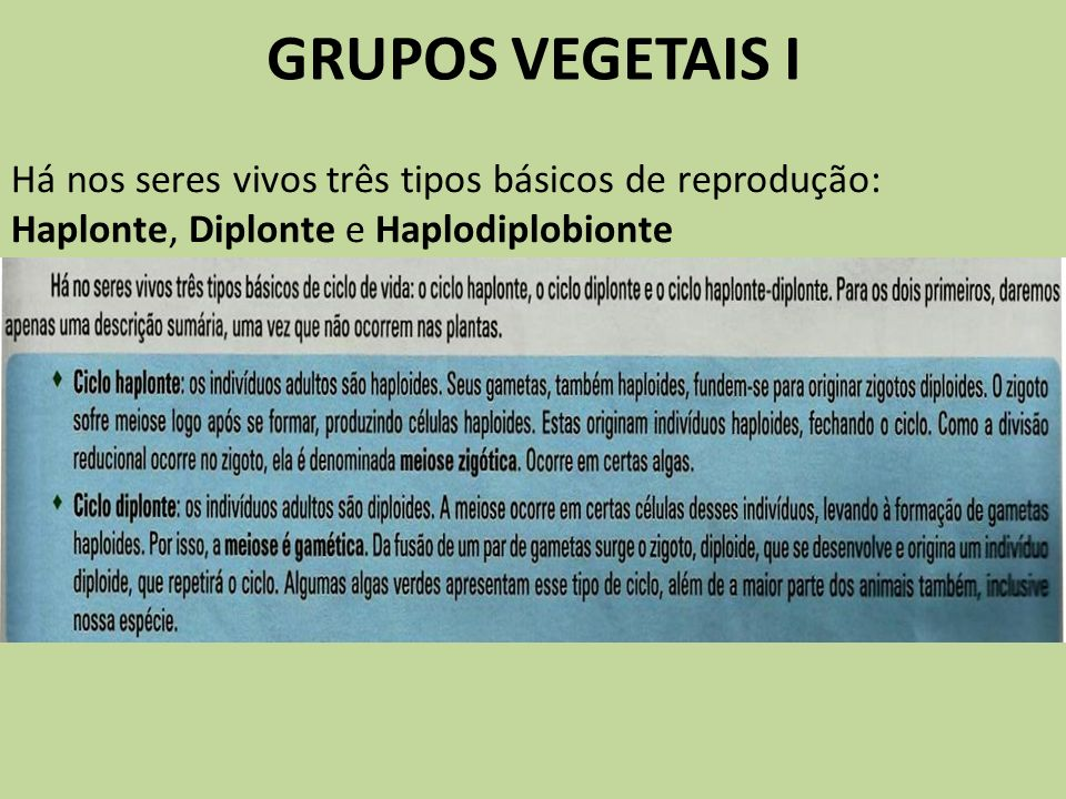GRUPOS VEGETAIS I Há nos seres vivos três tipos básicos de reprodução: Haplonte, Diplonte e Haplodiplobionte.