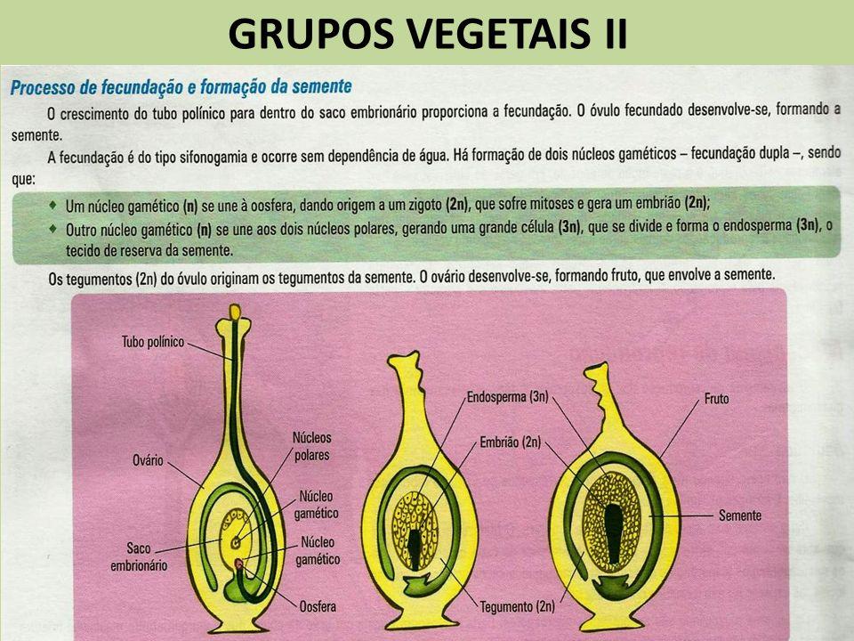 GRUPOS VEGETAIS II