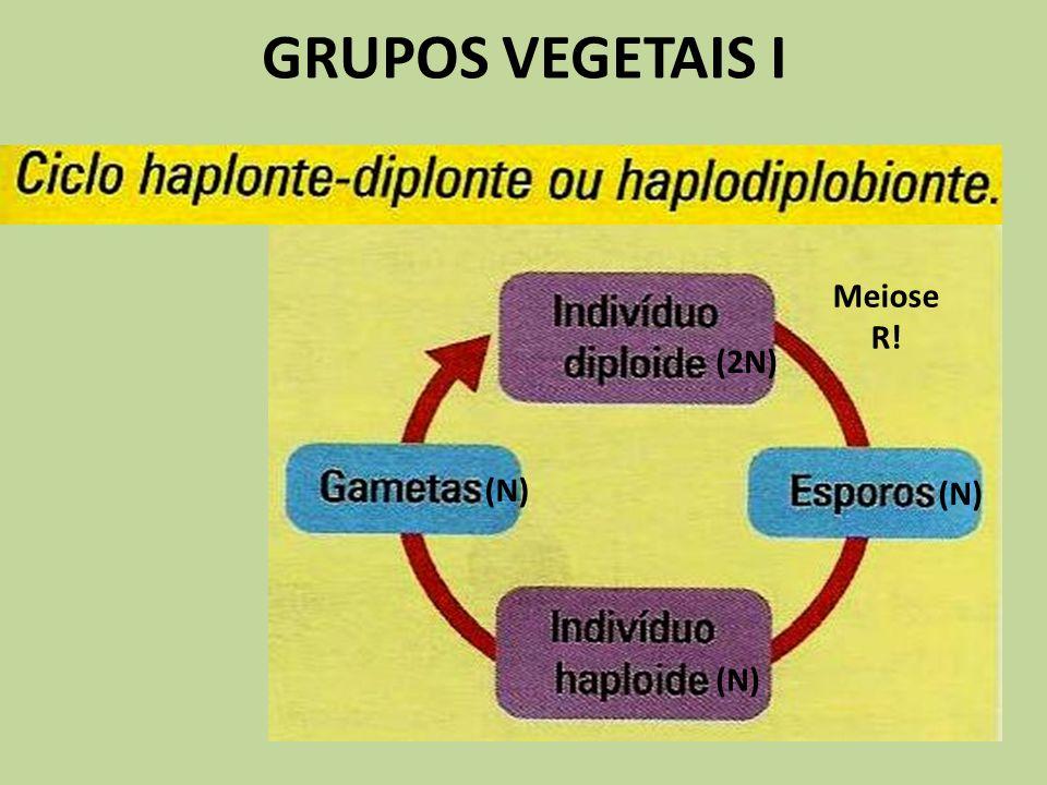 GRUPOS VEGETAIS I Meiose R! (2N) (N) (N) (N)