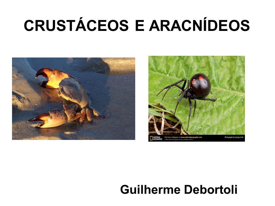 CRUSTÁCEOS E ARACNÍDEOS