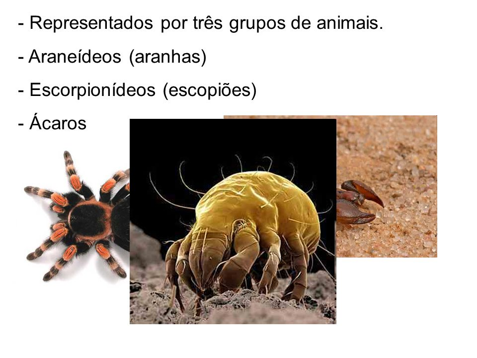 Representados por três grupos de animais.
