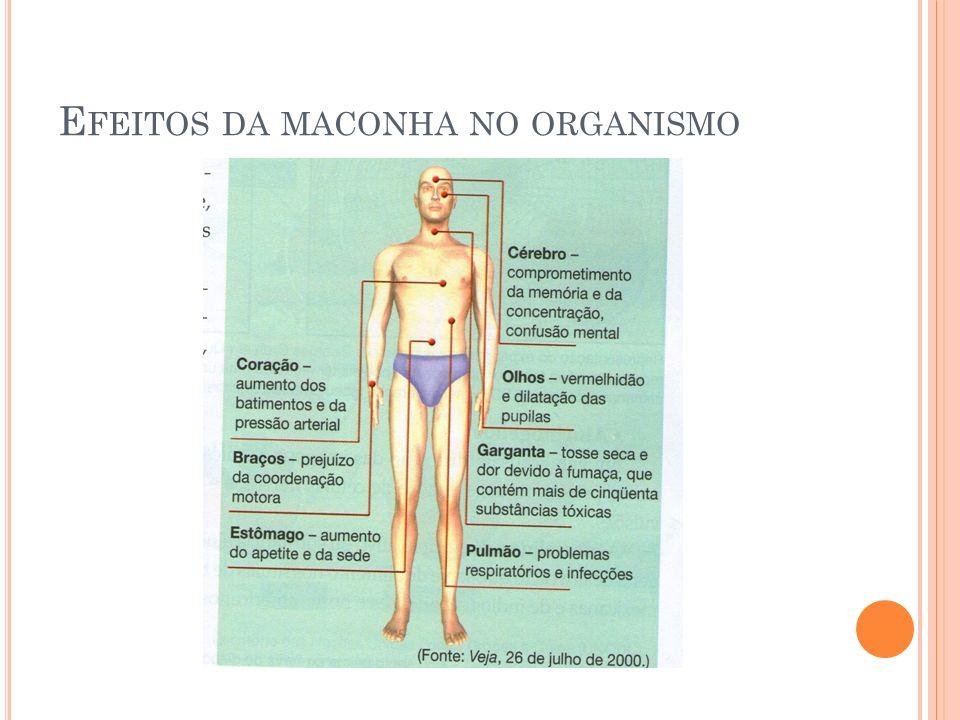 Efeitos da maconha no organismo