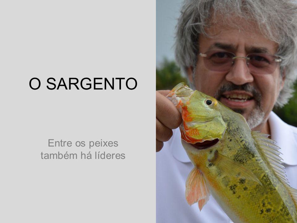 O SARGENTO Entre os peixes também há líderes