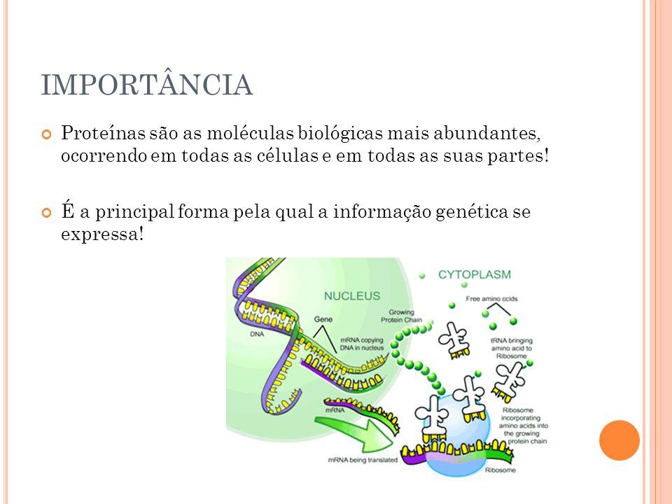 IMPORTÂNCIA Proteínas são as moléculas biológicas mais abundantes, ocorrendo em todas as células e em todas as suas partes!