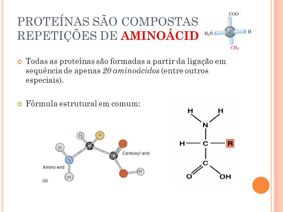 PROTEÍNAS SÃO COMPOSTAS POR REPETIÇÕES DE AMINOÁCIDOS