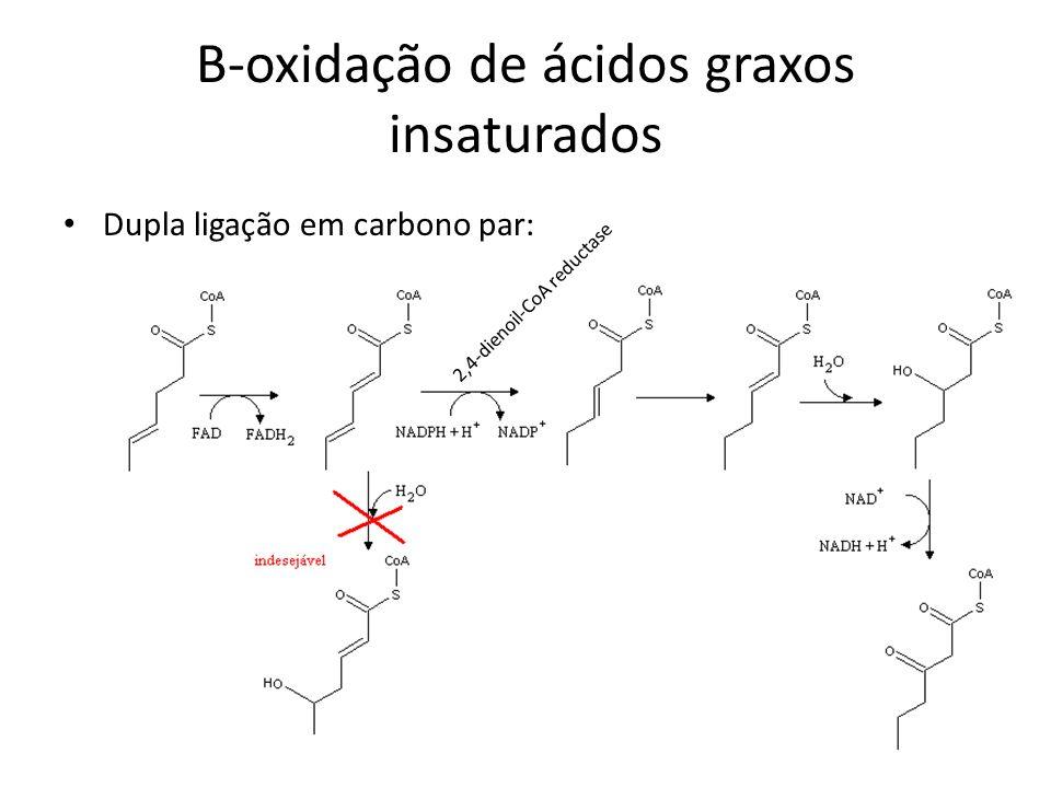 B-oxidação de ácidos graxos insaturados