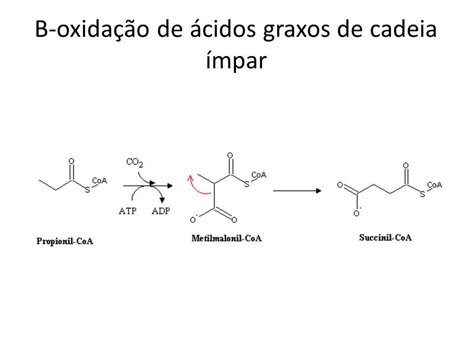 B-oxidação de ácidos graxos de cadeia ímpar