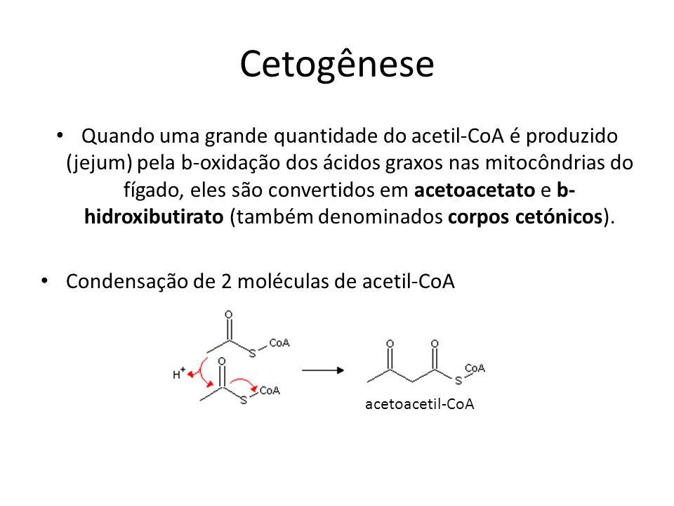 Cetogênese