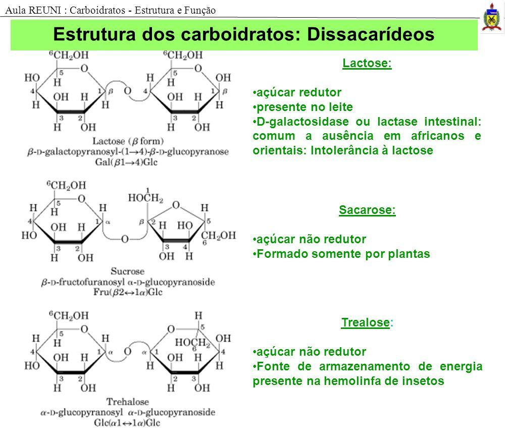 Estrutura dos carboidratos: Dissacarídeos