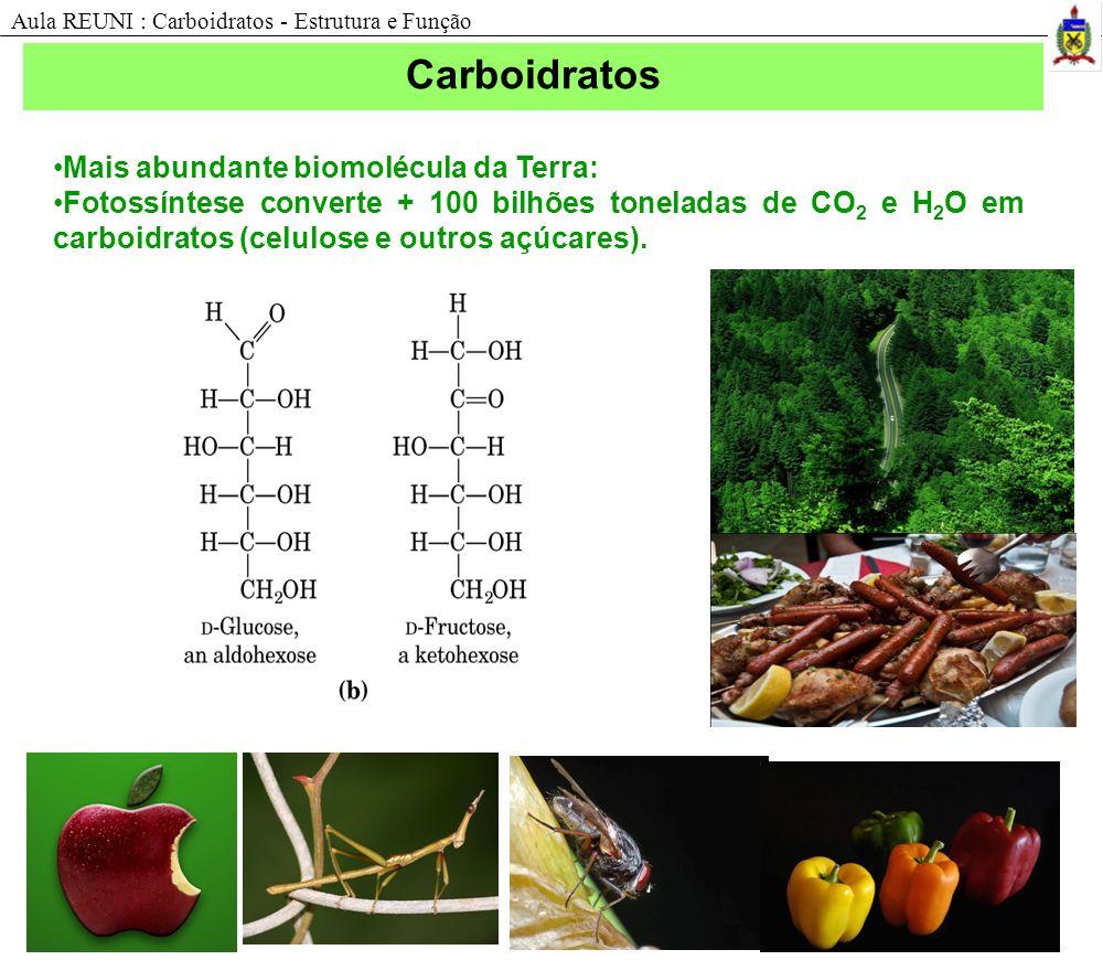 Carboidratos Mais abundante biomolécula da Terra: