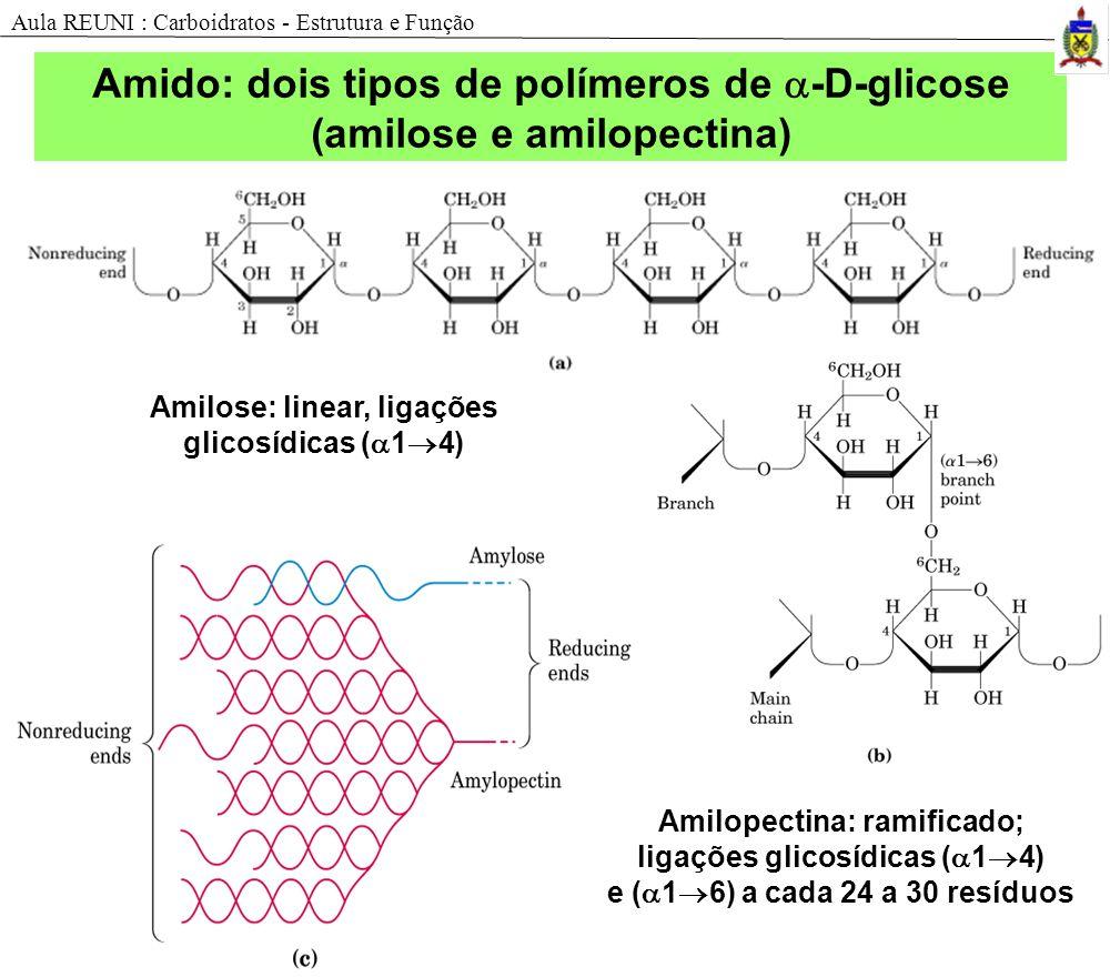 Amido: dois tipos de polímeros de -D-glicose (amilose e amilopectina)