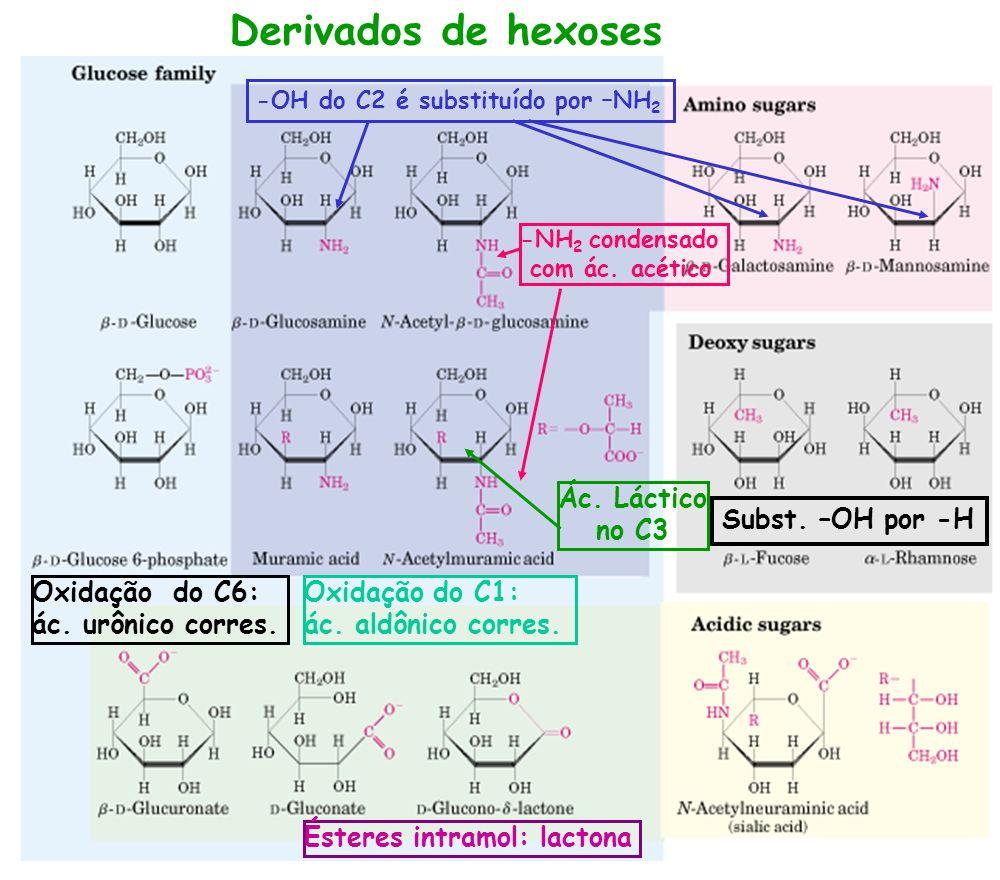 Derivados de hexoses Ác. Láctico no C3 Subst. –OH por -H