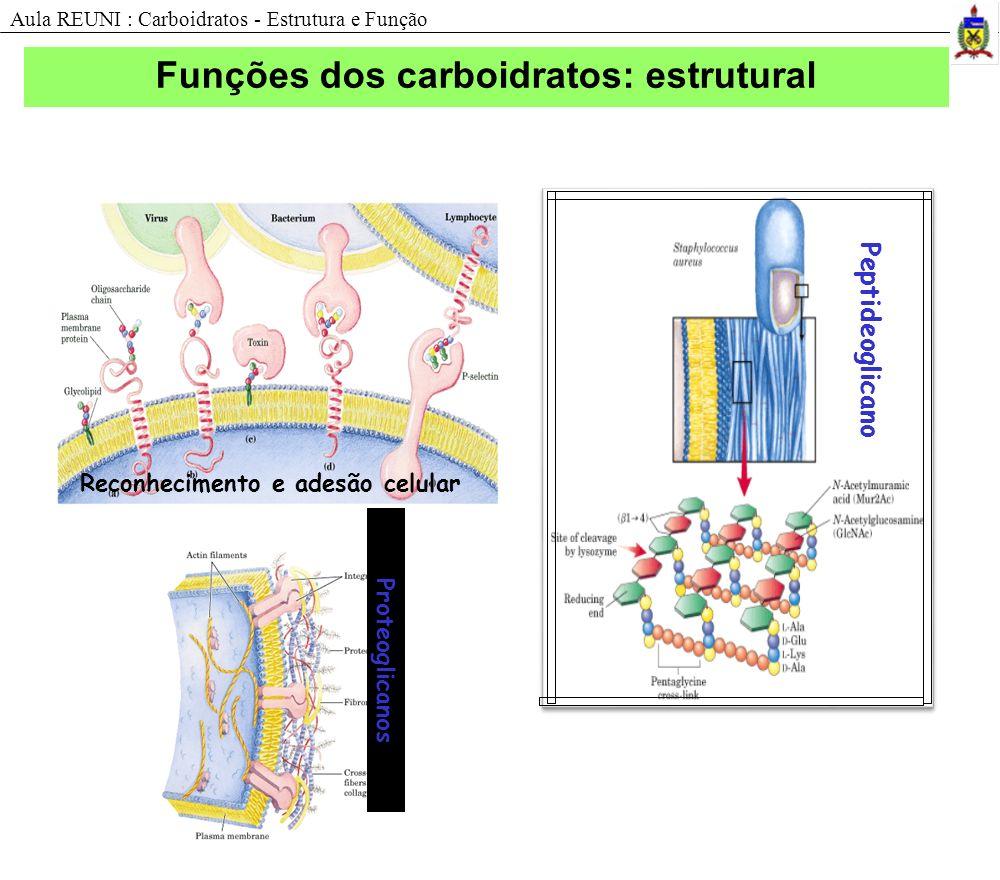 Funções dos carboidratos: estrutural