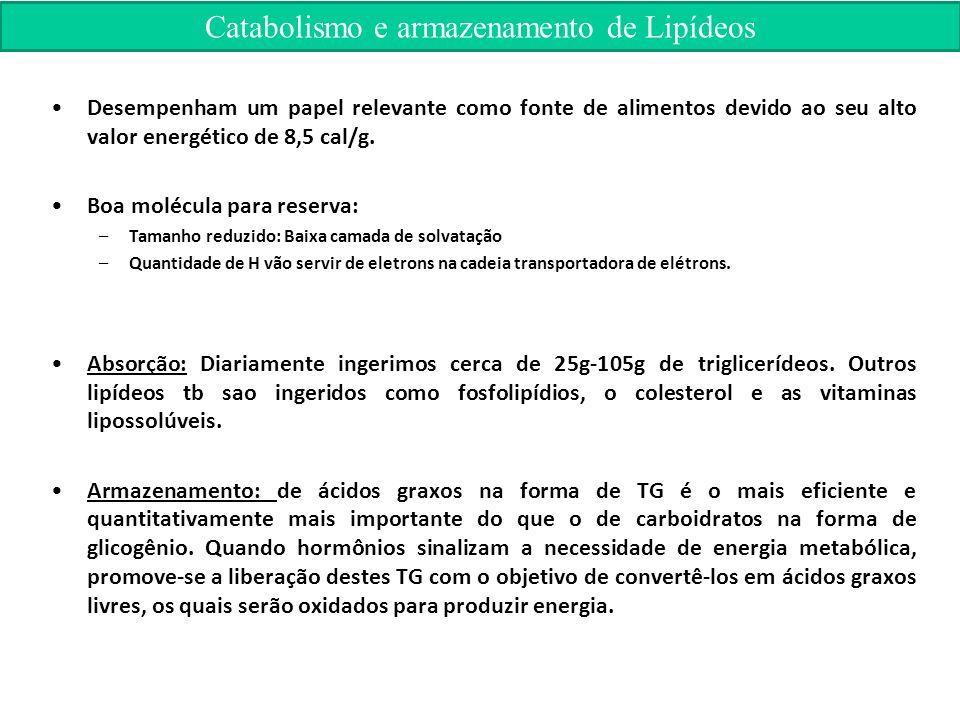 Catabolismo e armazenamento de Lipídeos