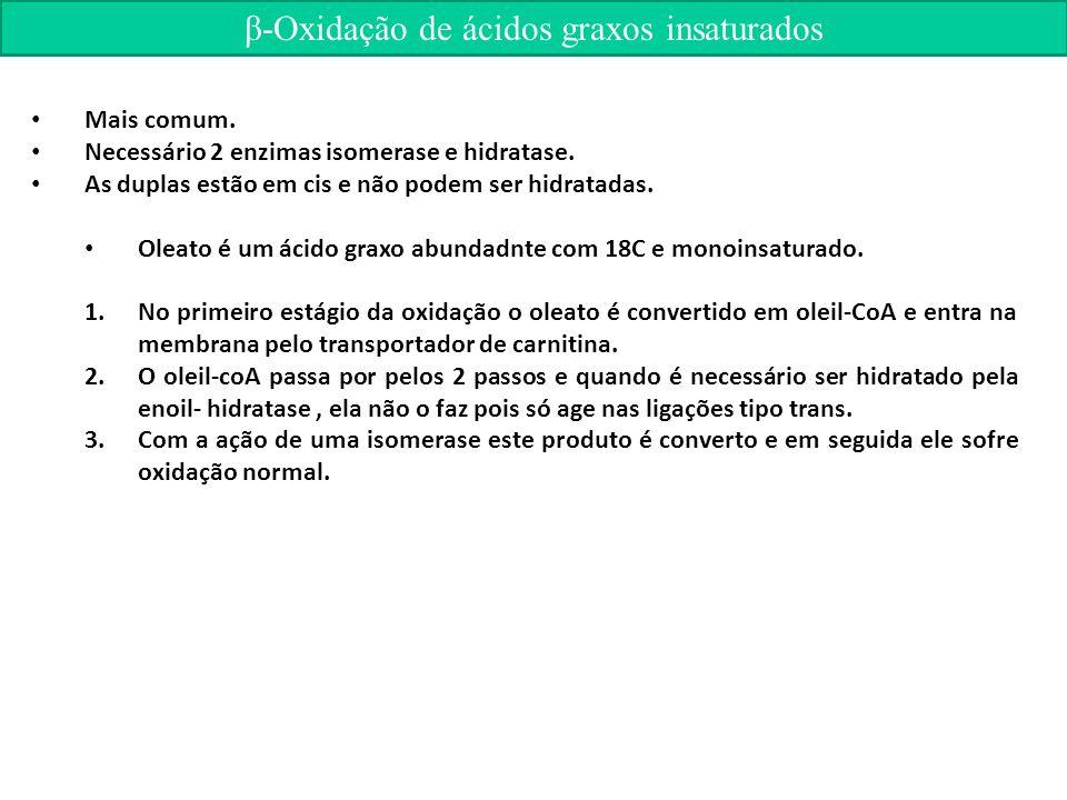 β-Oxidação de ácidos graxos insaturados