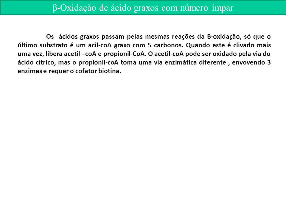β-Oxidação de ácido graxos com número ímpar