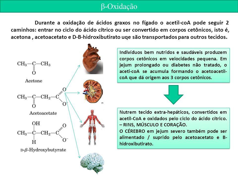 β-Oxidação