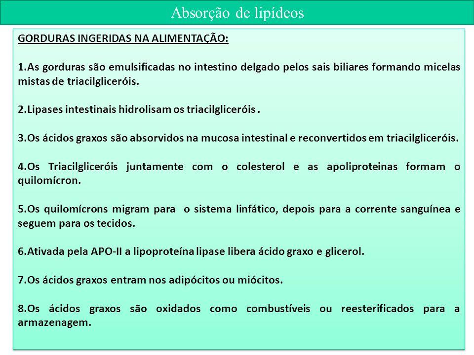 Absorção de lipídeos GORDURAS INGERIDAS NA ALIMENTAÇÃO: