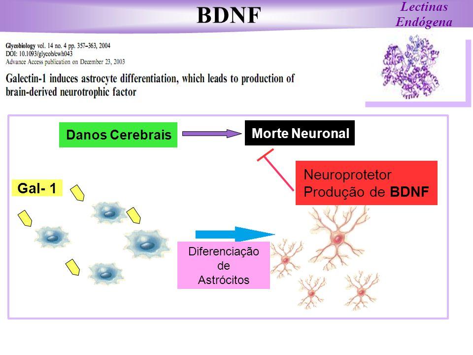 BDNF Neuroprotetor Produção de BDNF Gal- 1 Lectinas Endógena