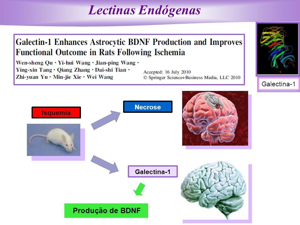 Lectinas Endógenas Produção de BDNF Galectina-1 Necrose Isquemia